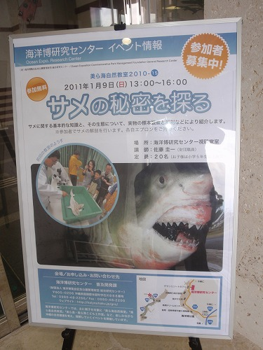 サメの秘密?!_c0180460_0431777.jpg