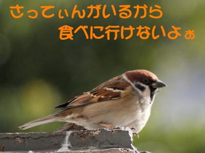 b0158061_22133479.jpg