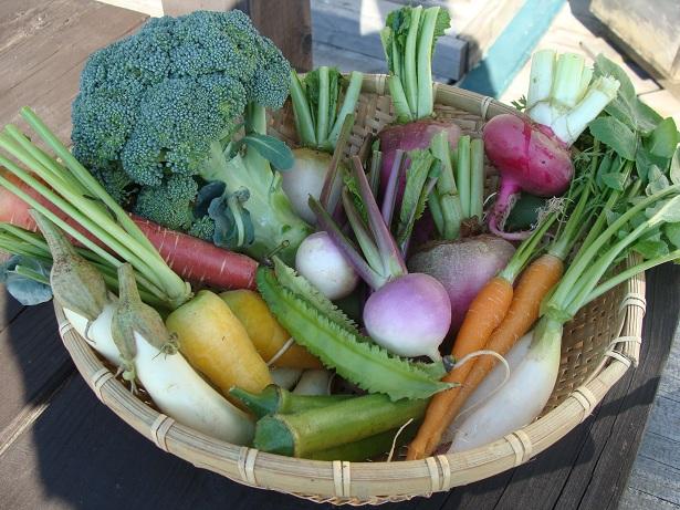 本日のお野菜_a0195373_0231410.jpg
