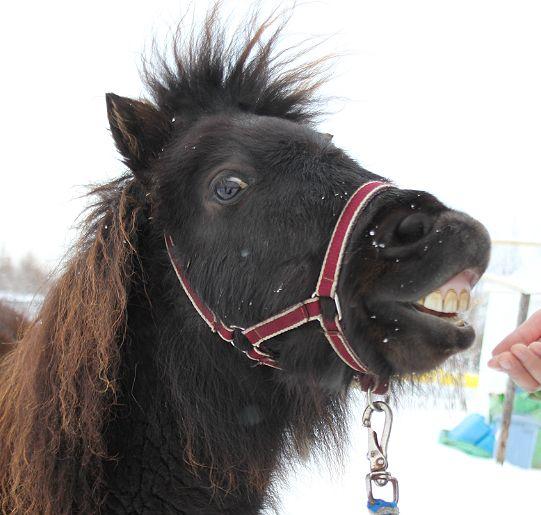 黒い馬_c0155902_21412175.jpg