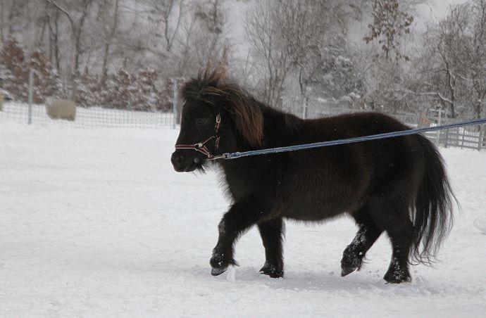 黒い馬_c0155902_21434440.jpg
