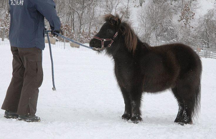 黒い馬_c0155902_21452354.jpg