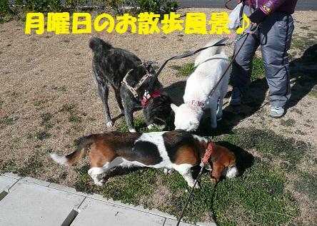 f0121712_23283263.jpg