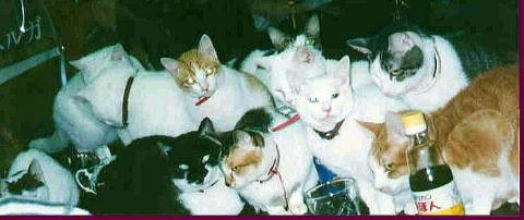 我が家の猫たち_a0173527_14473747.jpg