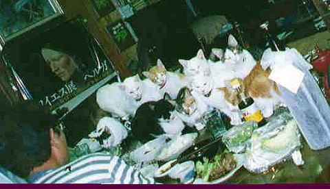 我が家の猫たち_a0173527_1447654.jpg