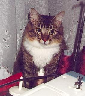我が家の猫たち_a0173527_14555812.jpg