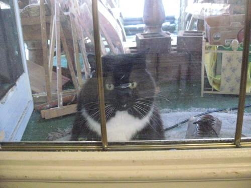 我が家の猫たち_a0173527_15171933.jpg