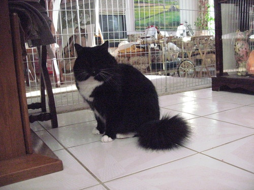 我が家の猫たち_a0173527_1565455.jpg