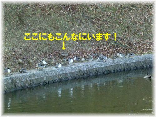 b0206444_21205691.jpg