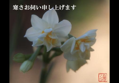 f0111147_20273290.jpg