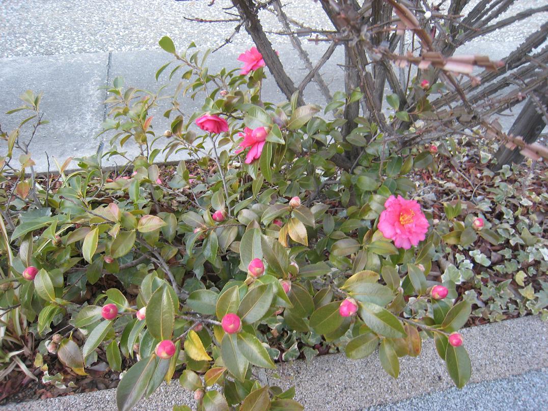 冬の花_f0205367_19444054.jpg