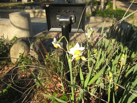 冬の花_f0205367_19481163.jpg
