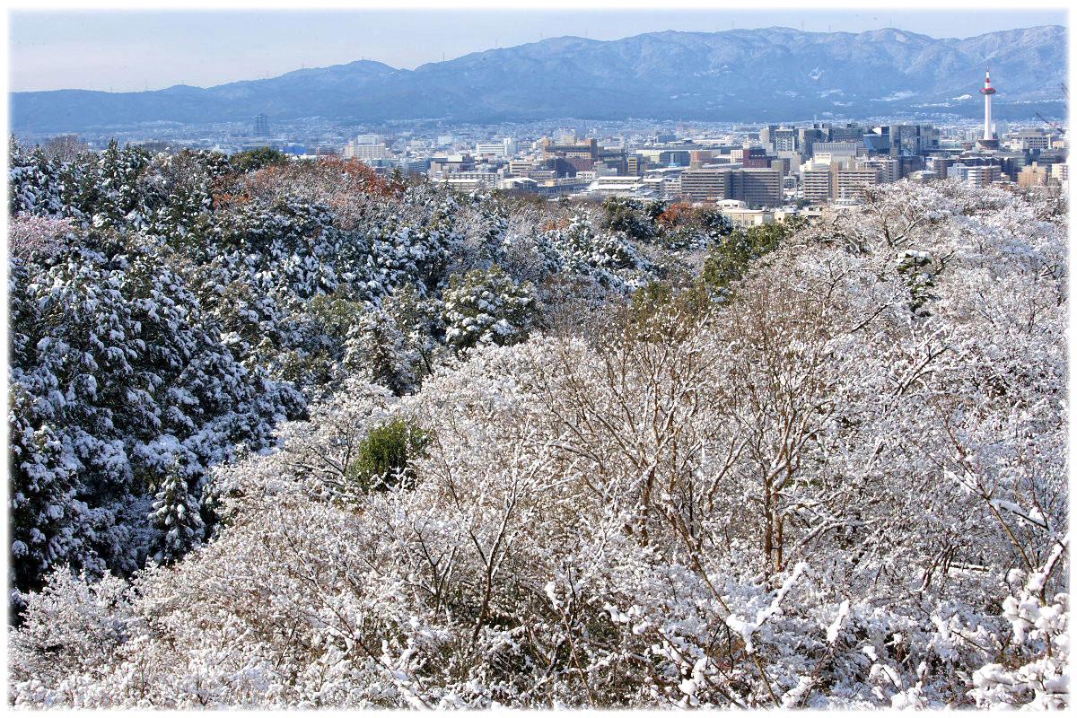 雪景色 <京都タワー>_f0021869_2143112.jpg