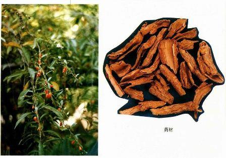 植物の部位によって使う道が違う―その④_f0138875_1113455.jpg