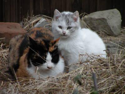 メトロノーム猫さんちの場合_c0193077_21365168.jpg