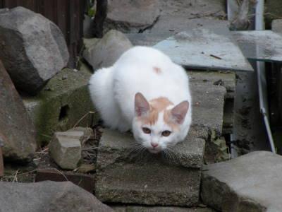 メトロノーム猫さんちの場合_c0193077_21371471.jpg