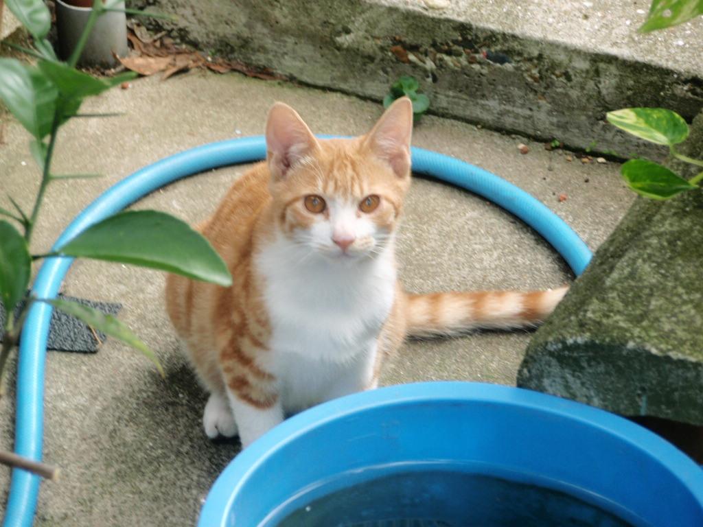 猫の好物_b0206085_0494130.jpg