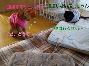 b0200310_89563.jpg