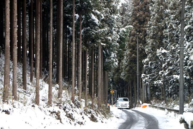 雪景色 杉坂_e0048413_11515181.jpg