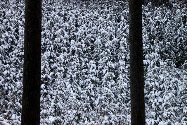 雪景色 杉坂_e0048413_11524960.jpg