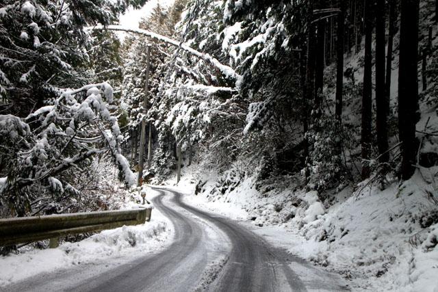 雪景色 杉坂_e0048413_1152630.jpg