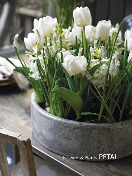 ペタルおすすめ、春の商品_d0157716_189321.jpg