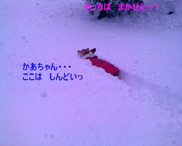 かいたく ちう_e0147716_8212451.jpg