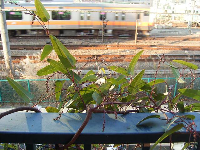 植物とスープボトル_b0206421_17165947.jpg