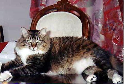 我が家の猫たち_a0173527_624549.jpg