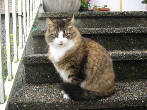 我が家の猫たち_a0173527_6285283.jpg