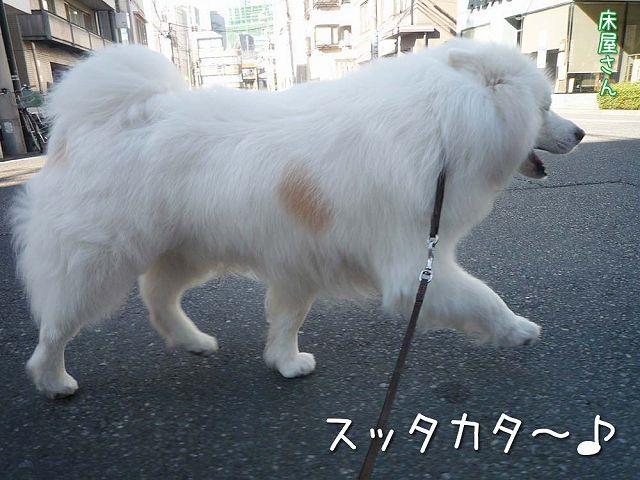 冬のお散歩_c0062832_2023427.jpg
