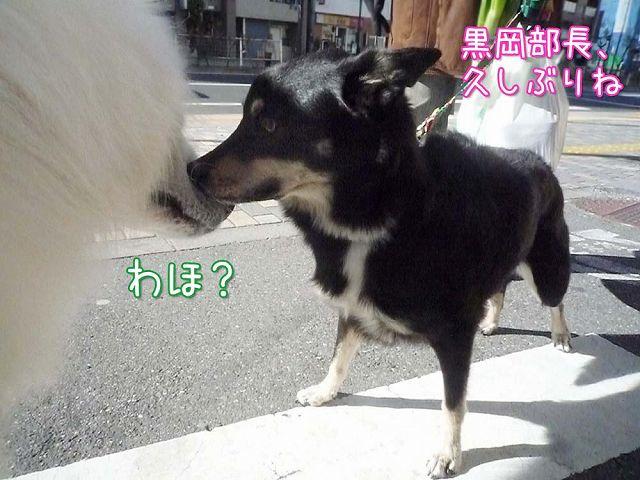 冬のお散歩_c0062832_2023983.jpg