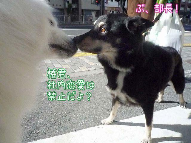 冬のお散歩_c0062832_2024427.jpg