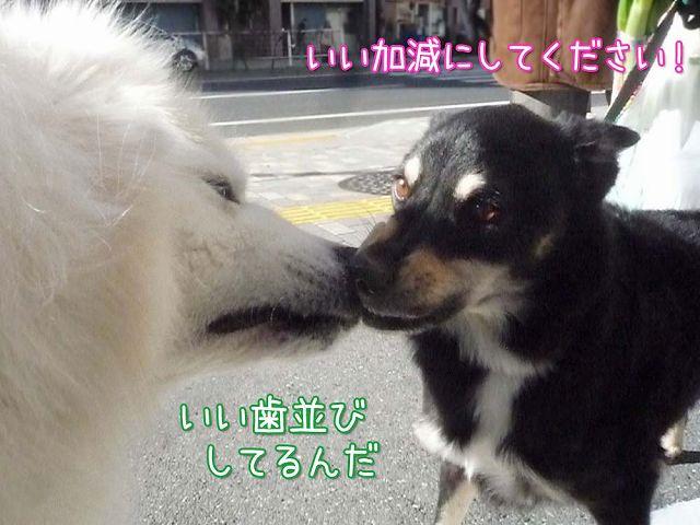 冬のお散歩_c0062832_20247100.jpg