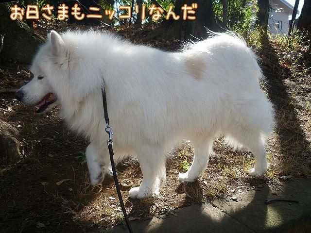 冬のお散歩_c0062832_2025674.jpg
