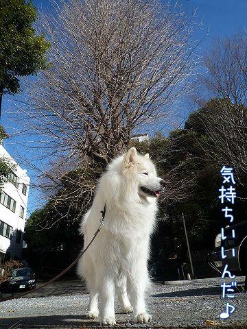 冬のお散歩_c0062832_20323.jpg