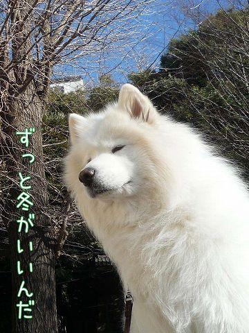 冬のお散歩_c0062832_203746.jpg