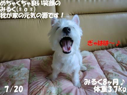 c0212637_11305327.jpg