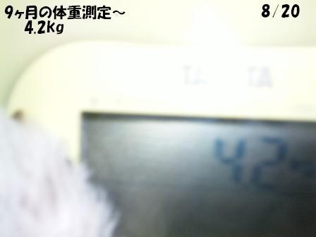c0212637_1131440.jpg