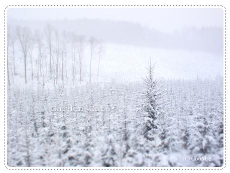 冬の美瑛 ♪_a0097840_10105184.jpg