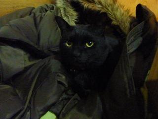 猫のお友だち ちーくん編。_a0143140_0551714.jpg