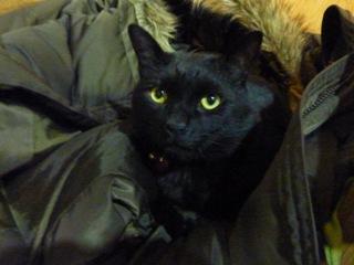 猫のお友だち ちーくん編。_a0143140_0555736.jpg