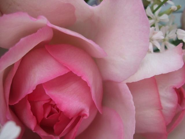 オークリーフ(バラ・ピンクイブピアッチェとスイートピーの花束)_f0049672_14374199.jpg