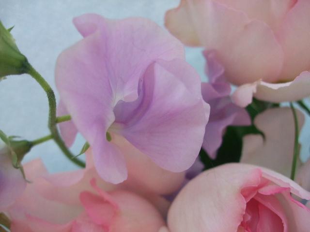 オークリーフ(バラ・ピンクイブピアッチェとスイートピーの花束)_f0049672_14374857.jpg