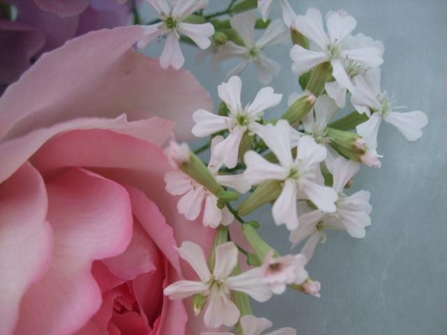 オークリーフ(バラ・ピンクイブピアッチェとスイートピーの花束)_f0049672_14375617.jpg
