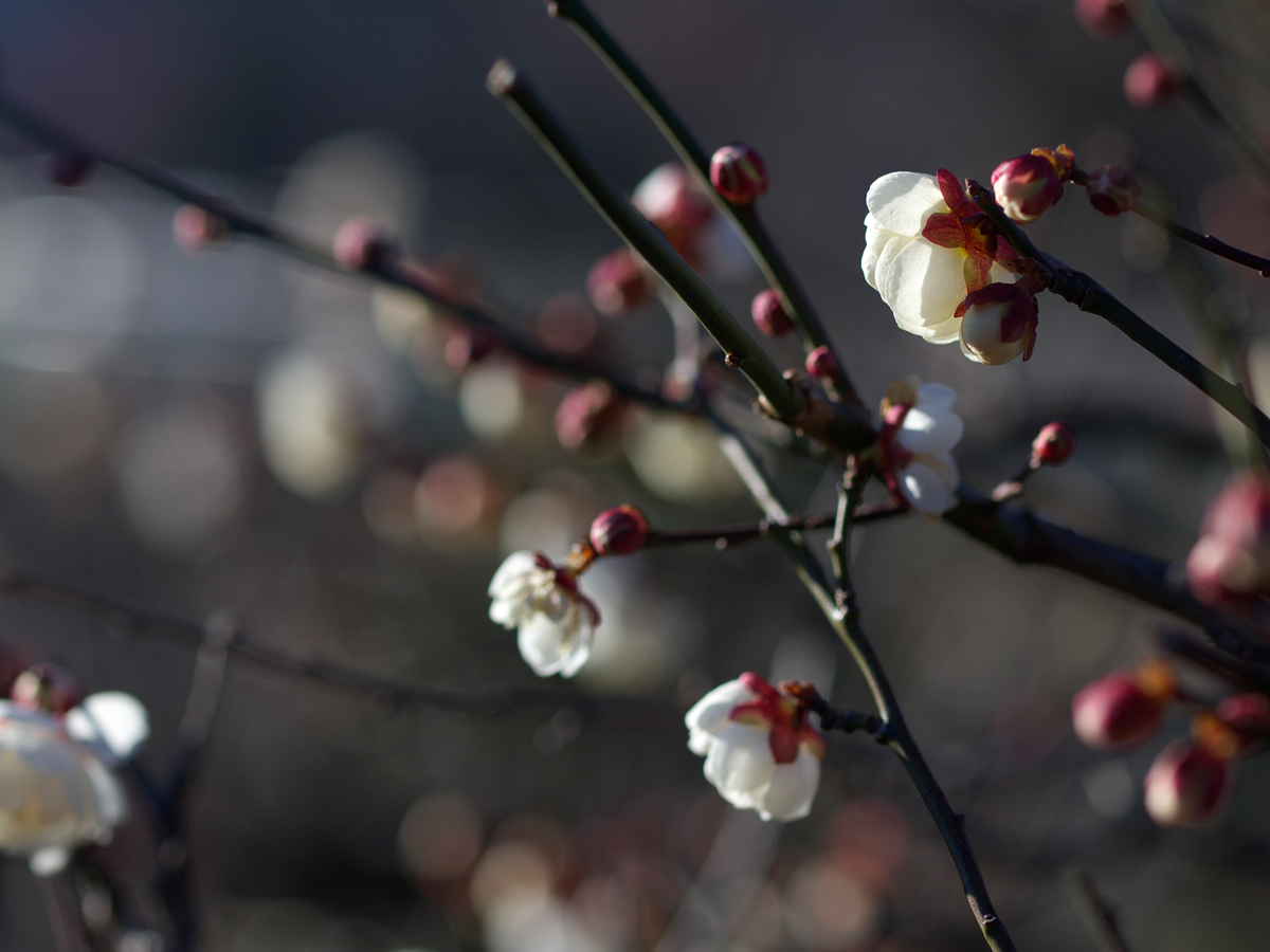 春の息吹き_f0121181_23225061.jpg