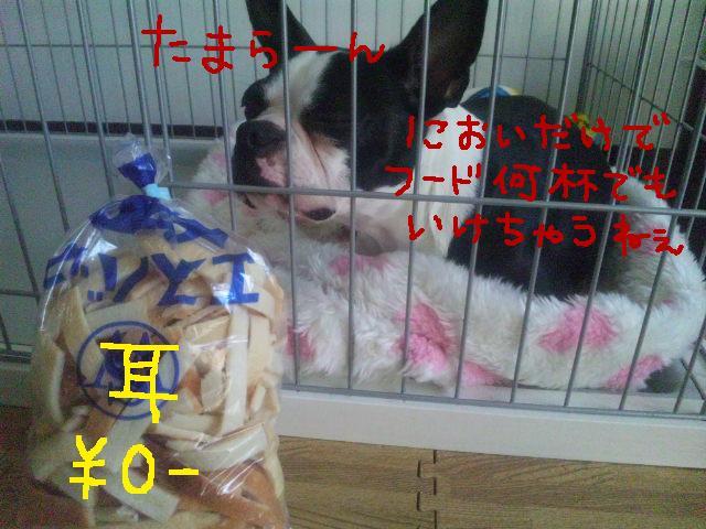 レッツ★商店街_d0187891_1281192.jpg