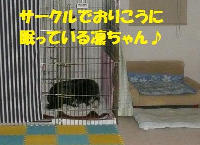 f0121712_13245052.jpg