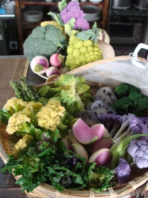 本日のお野菜_a0195373_13145723.jpg