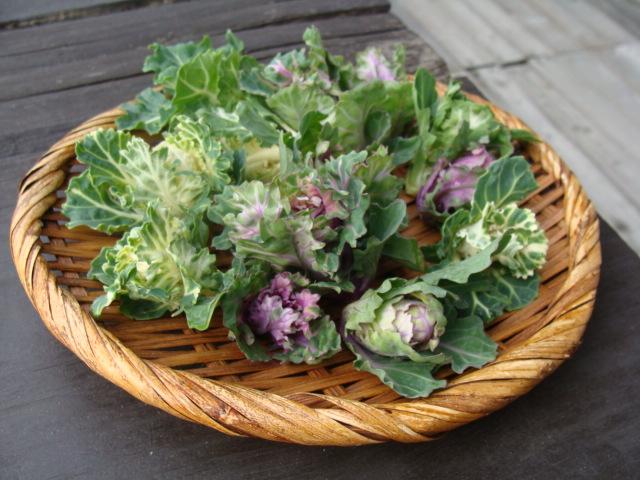 本日のお野菜_a0195373_1315886.jpg